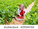 child picking strawberries.... | Shutterstock . vector #429344764