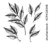 hand drawn vector illustration  ... | Shutterstock .eps vector #429418348