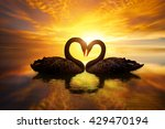 beautiful black swan in heart... | Shutterstock . vector #429470194