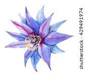 watercolor blue cactus flower   ... | Shutterstock . vector #429491974