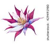 Watercolor Pink Flower  Cactus...