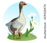 Goose Stands On A Meadow With...