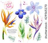 botanical illustration with... | Shutterstock . vector #429565270