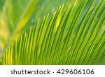 natural green background with... | Shutterstock . vector #429606106