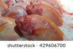 Fresh Red Tilapia Fishes...