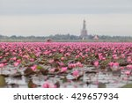 red lotus  thailand  lotus  red ... | Shutterstock . vector #429657934