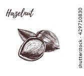 hazelnut in hand drawn style....   Shutterstock .eps vector #429710830