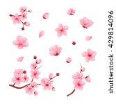 Vector Illustration Sakura...