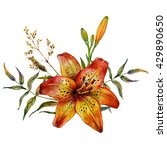 watercolor tiger lily with wild ... | Shutterstock . vector #429890650