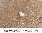 shell | Shutterstock . vector #429932074