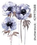 anemones painted with... | Shutterstock . vector #429975688