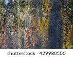Close Up Image Of Lichen On Th...
