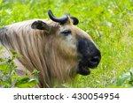 takin | Shutterstock . vector #430054954