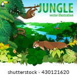 vector rainforest jungle with... | Shutterstock .eps vector #430121620
