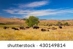 Bison Grasslands Custer State Park - Fine Art prints