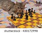 Stock photo cat plays chess 430172998