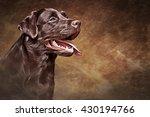 Drawing Dog Labrador  Portrait...