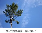 lumberjack with chainsaw on tree | Shutterstock . vector #4302037