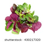 Green And Red Spinach Isolated...