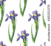 Watercolor Iris On White...