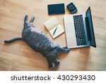 Stock photo lazy cat working concept 430293430