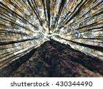 pine forest in bantul ... | Shutterstock . vector #430344490