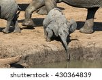 Stock photo baby elephant 430364839