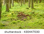 Green Forest Floor   Moss With...