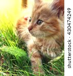 Stock photo little kitten on green grass 430474249
