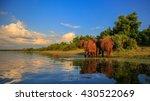 elephant herd with baby coming...   Shutterstock . vector #430522069