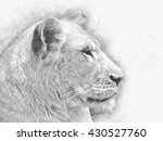 White Lioness Pencil Sketch  ...