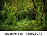 Overgrown Forest Opening  Summer