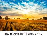 beautiful sunrise over field   Shutterstock . vector #430533496