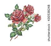 rose color pencil  bouquet ... | Shutterstock . vector #430538248