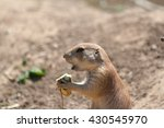 Awesome Prairie Dog Outdoor...