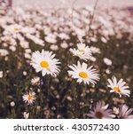 top down beautiful field of...   Shutterstock . vector #430572430