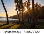Stock photo palm tree on beach at sunset reunion island 430579420