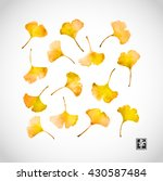 yellow gingko leaves on white... | Shutterstock .eps vector #430587484