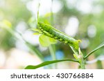 Caterpillar Green Eating