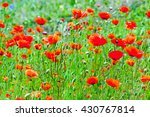 red poppies background | Shutterstock . vector #430767814