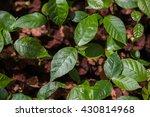 nursery seedlings plantation.