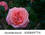 Orange Pink Close Up Delicate...