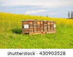 Apiary In The Field Of Rapeseed