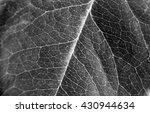 leaves have veins | Shutterstock . vector #430944634