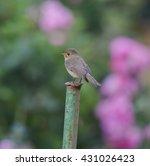 little bird | Shutterstock . vector #431026423