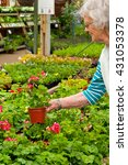 mature lady buying plants at a... | Shutterstock . vector #431053378