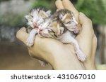 Kittens Taking A Nap  Three Ca...