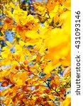 leaves under salt and dew red... | Shutterstock . vector #431093146