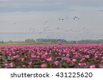 birds  water birds  red lotus ... | Shutterstock . vector #431225620