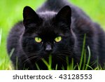 Cat looking at the watcher - stock photo